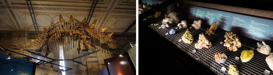 Dinosaurussen in National History Museum in Londen
