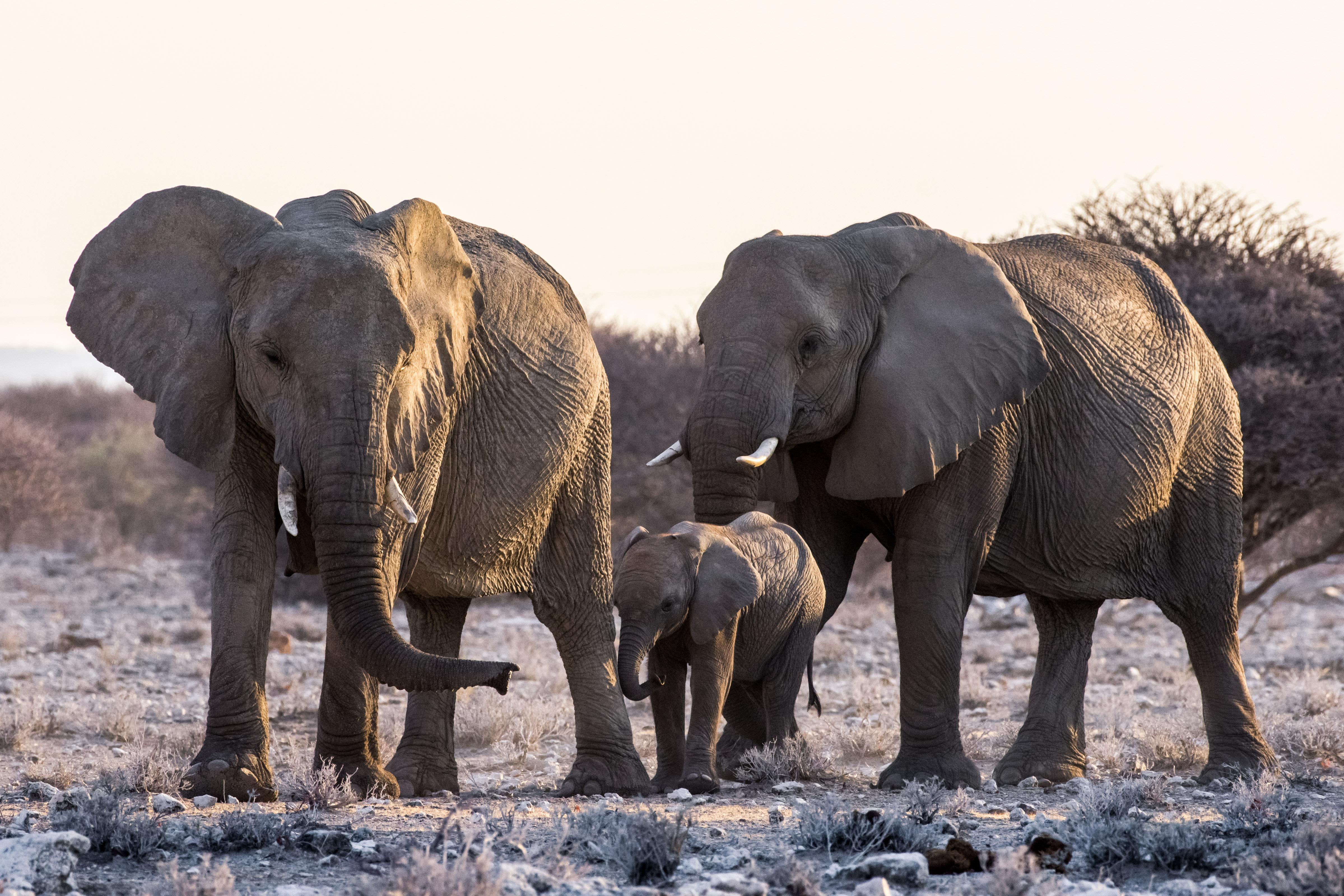 Olifanten in Etosha National Park